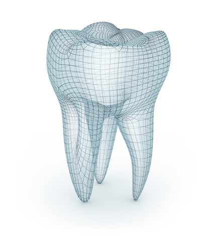 smile forever human molar 3d model diagram